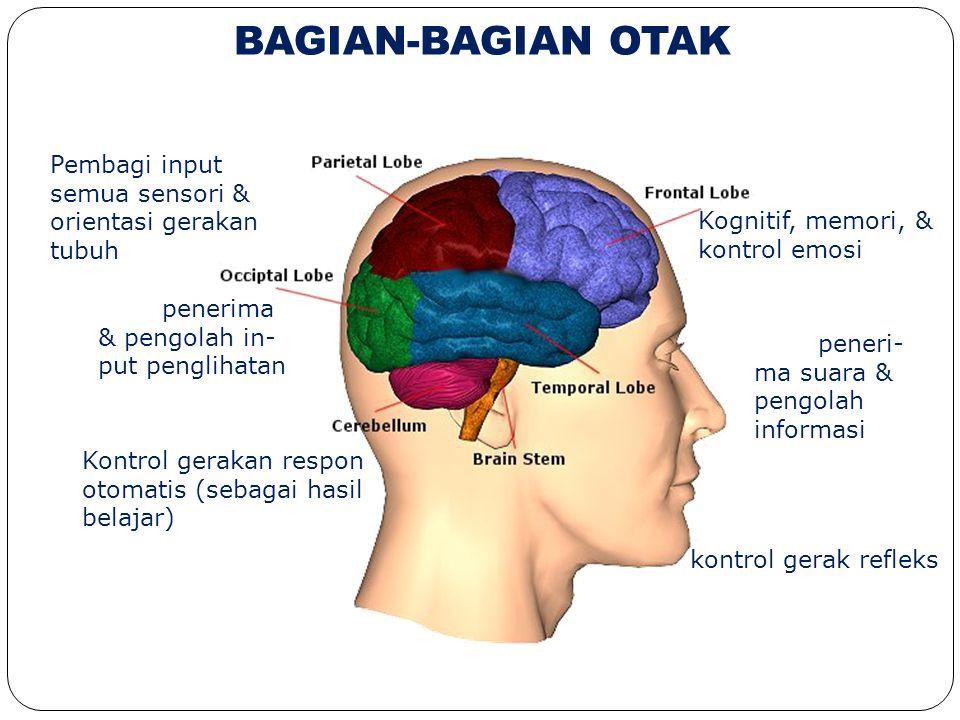 BAGIAN-BAGIAN OTAK Kognitif, memori, & kontrol emosi Area peneri- ma suara & pengolah informasi Keseimbangan & kontrol gerak refleks Pembagi input sem