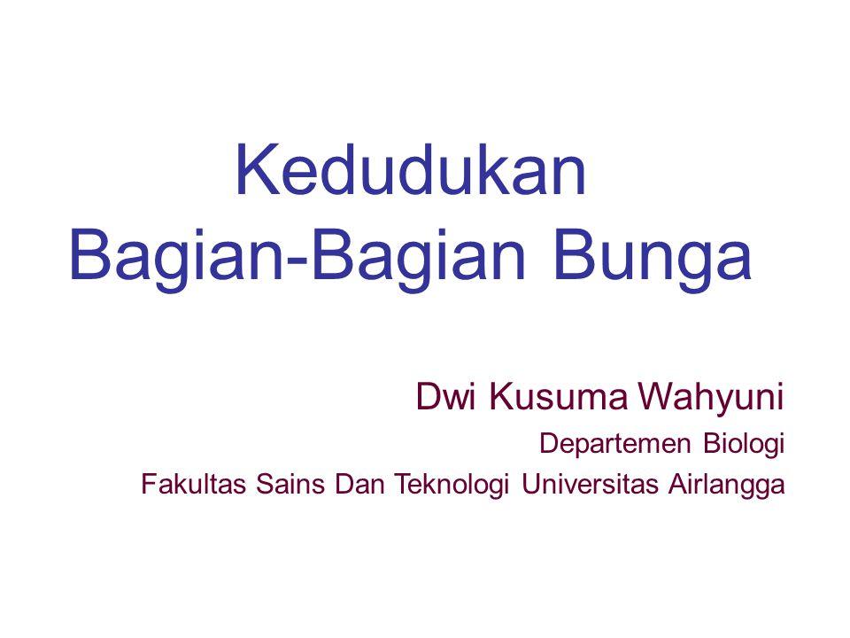 Kedudukan Bagian-Bagian Bunga Dwi Kusuma Wahyuni Departemen Biologi Fakultas Sains Dan Teknologi Universitas Airlangga