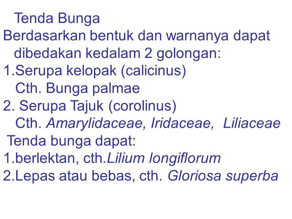 Tenda Bunga Berdasarkan bentuk dan warnanya dapat dibedakan kedalam 2 golongan: 1.Serupa kelopak (calicinus) Cth. Bunga palmae 2. Serupa Tajuk (coroli