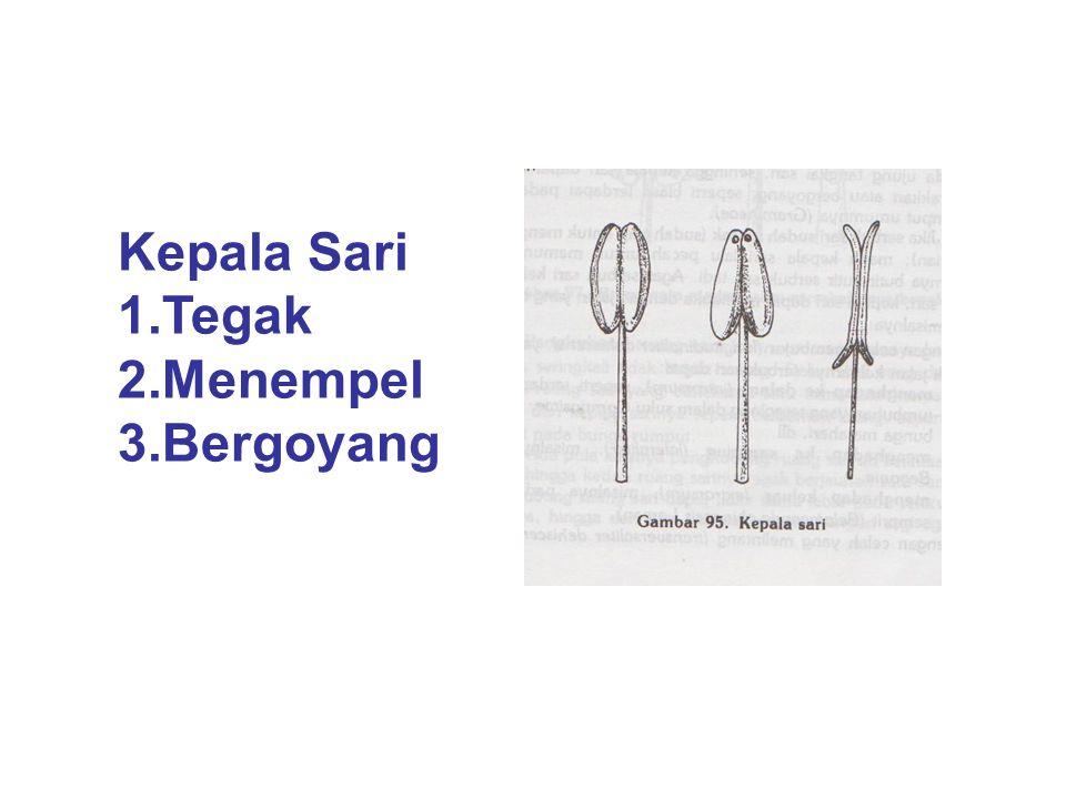 Kepala Sari 1.Tegak 2.Menempel 3.Bergoyang