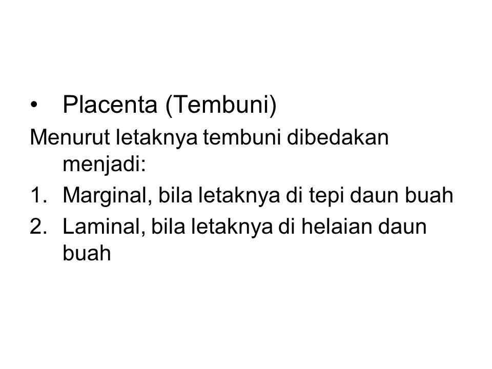 Placenta (Tembuni) Menurut letaknya tembuni dibedakan menjadi: 1.Marginal, bila letaknya di tepi daun buah 2.Laminal, bila letaknya di helaian daun bu