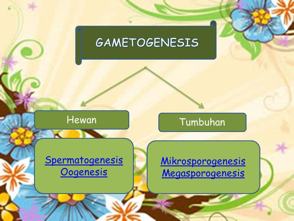 Hewan Spermatogenesis Oogenesis Tumbuhan Mikrosporogenesis Megasporogenesis