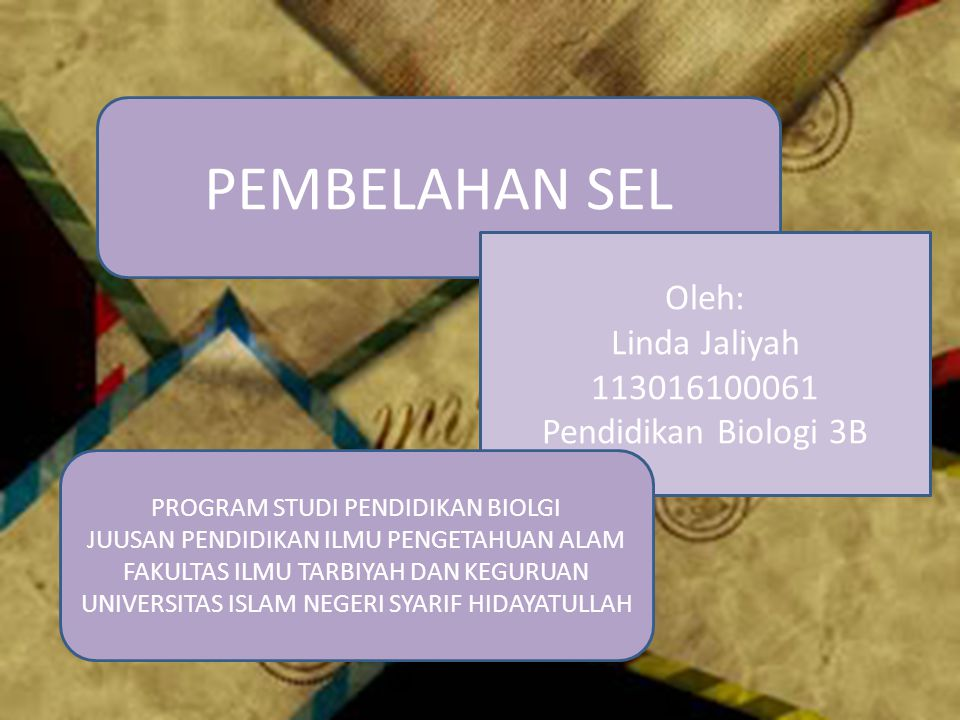 PEMBELAHAN SEL Oleh: Linda Jaliyah 113016100061 Pendidikan Biologi 3B PROGRAM STUDI PENDIDIKAN BIOLGI JUUSAN PENDIDIKAN ILMU PENGETAHUAN ALAM FAKULTAS ILMU TARBIYAH DAN KEGURUAN UNIVERSITAS ISLAM NEGERI SYARIF HIDAYATULLAH