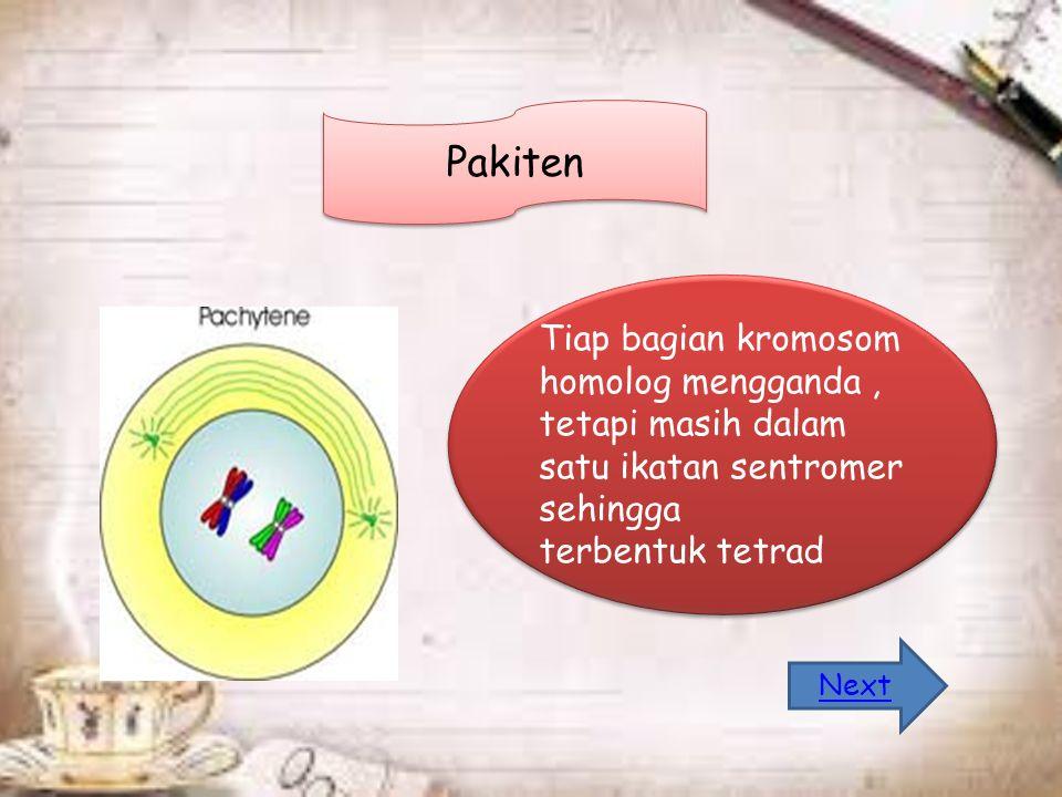 Pakiten Tiap bagian kromosom homolog mengganda, tetapi masih dalam satu ikatan sentromer sehingga terbentuk tetrad Tiap bagian kromosom homolog mengganda, tetapi masih dalam satu ikatan sentromer sehingga terbentuk tetrad Next