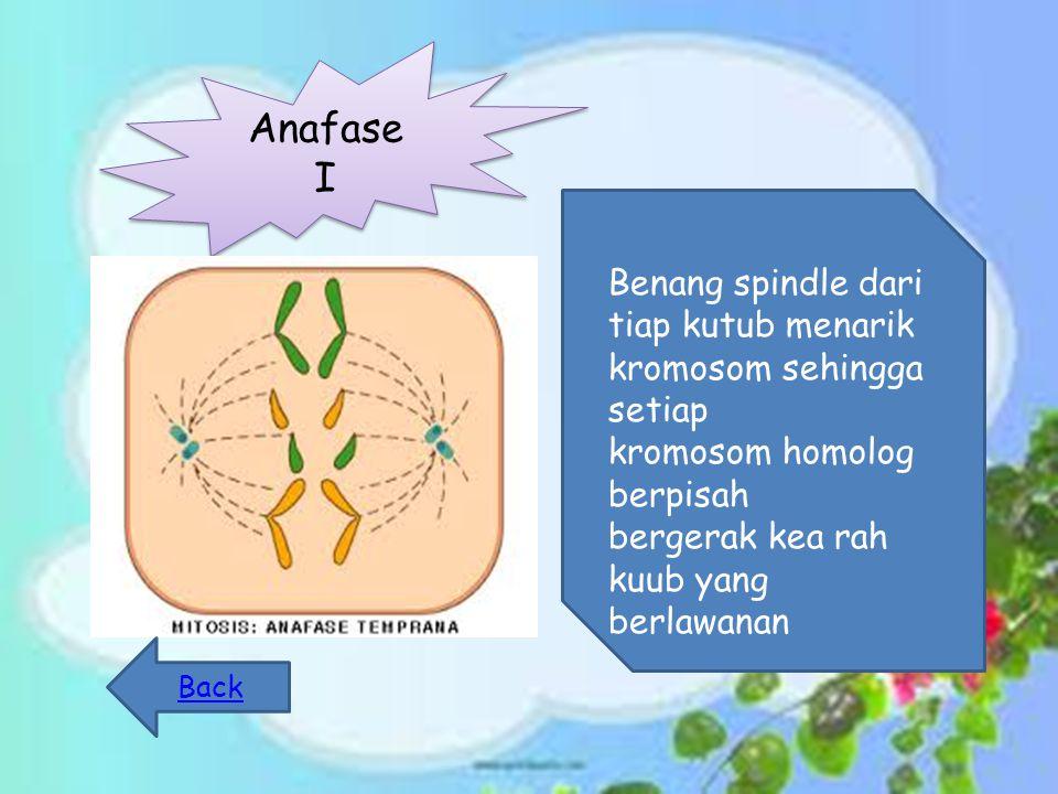 Anafase I Benang spindle dari tiap kutub menarik kromosom sehingga setiap kromosom homolog berpisah bergerak kea rah kuub yang berlawanan Back