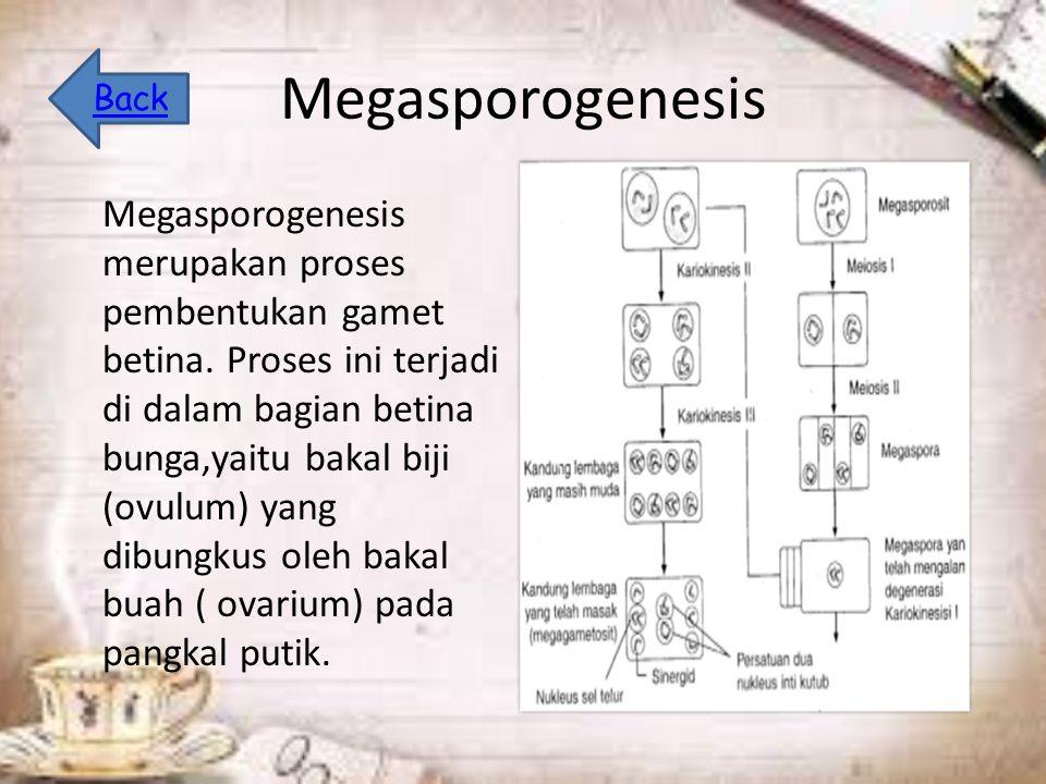 Megasporogenesis Megasporogenesis merupakan proses pembentukan gamet betina.