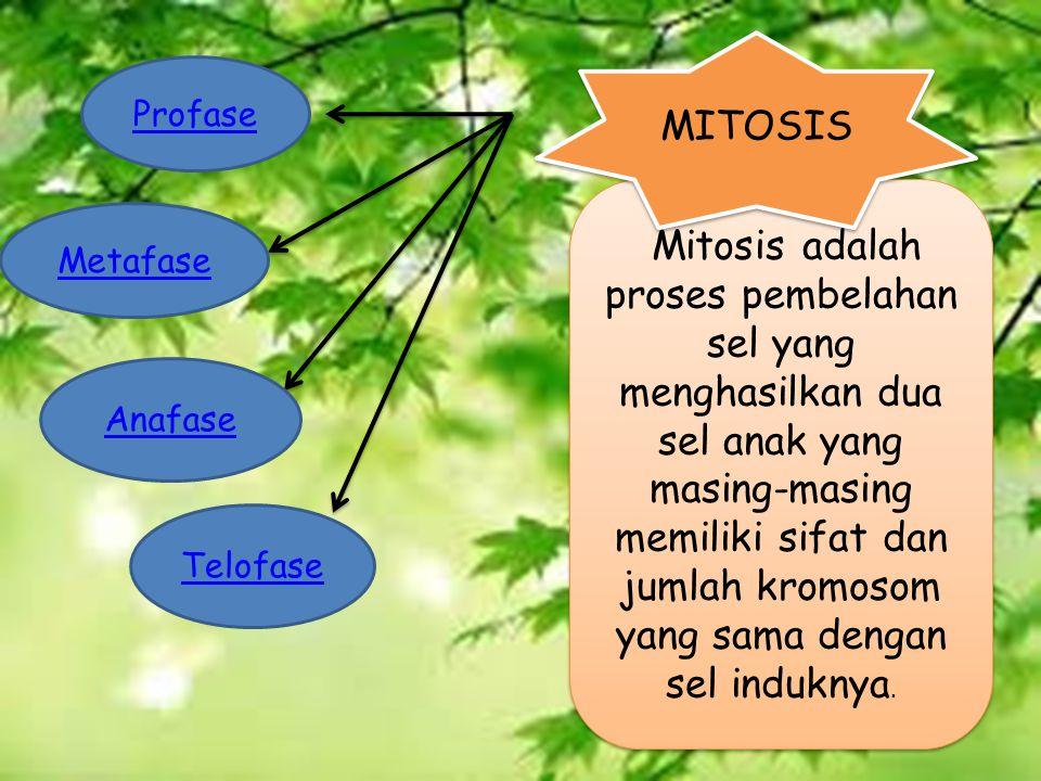 Mitosis adalah proses pembelahan sel yang menghasilkan dua sel anak yang masing-masing memiliki sifat dan jumlah kromosom yang sama dengan sel induknya.