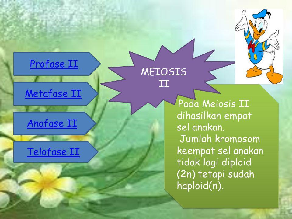 Pada Meiosis II dihasilkan empat sel anakan.
