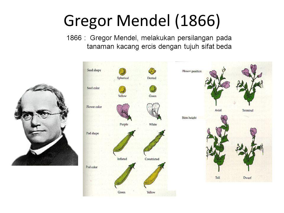 Gregor Mendel (1866) 1866 : Gregor Mendel, melakukan persilangan pada tanaman kacang ercis dengan tujuh sifat beda