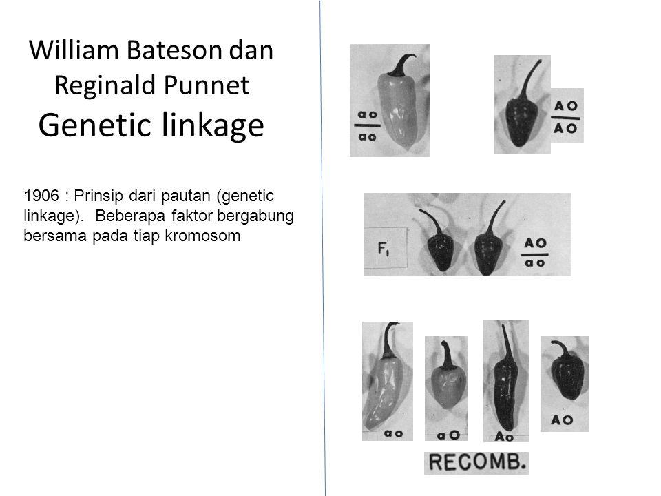 William Bateson dan Reginald Punnet Genetic linkage 1906 : Prinsip dari pautan (genetic linkage).