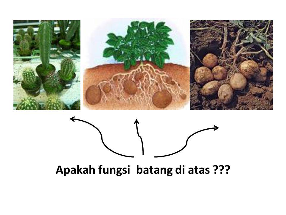 Apakah fungsi batang di atas ???