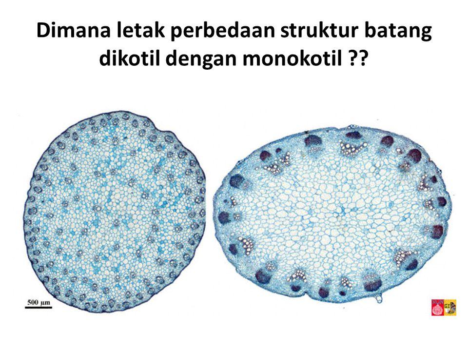 Dimana letak perbedaan struktur batang dikotil dengan monokotil ??