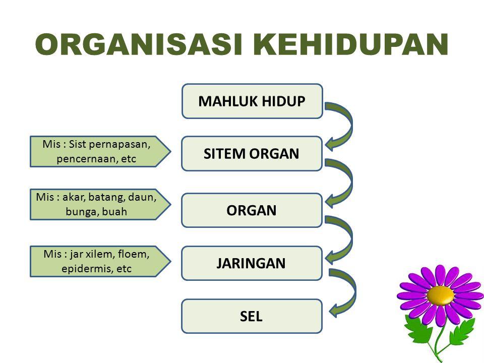 ORGANISASI KEHIDUPAN SITEM ORGAN MAHLUK HIDUP ORGAN JARINGAN SEL Mis : Sist pernapasan, pencernaan, etc Mis : akar, batang, daun, bunga, buah Mis : jar xilem, floem, epidermis, etc