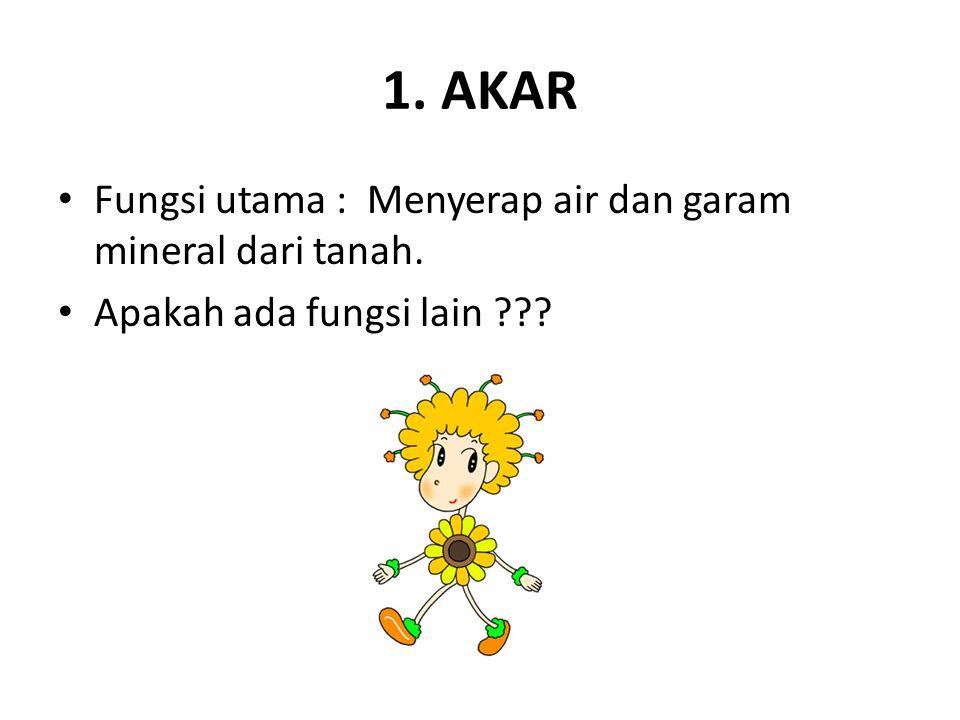 1. AKAR Fungsi utama : Menyerap air dan garam mineral dari tanah. Apakah ada fungsi lain ???