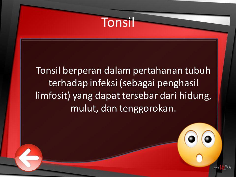 Tonsil Tonsil berperan dalam pertahanan tubuh terhadap infeksi (sebagai penghasil limfosit) yang dapat tersebar dari hidung, mulut, dan tenggorokan.
