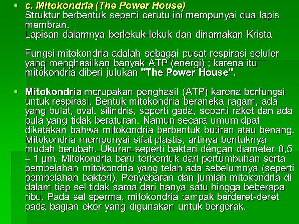  c. Mitokondria (The Power House) Struktur berbentuk seperti cerutu ini mempunyai dua lapis membran. Lapisan dalamnya berlekuk-lekuk dan dinamakan Kr