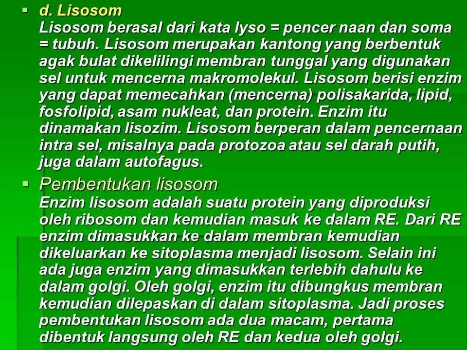  d. Lisosom Lisosom berasal dari kata lyso = pencer naan dan soma = tubuh. Lisosom merupakan kantong yang berbentuk agak bulat dikelilingi membran tu