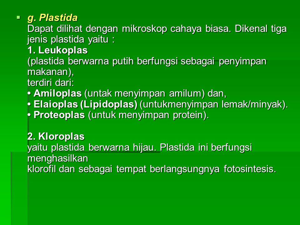  g. Plastida Dapat dilihat dengan mikroskop cahaya biasa. Dikenal tiga jenis plastida yaitu : 1. Leukoplas (plastida berwarna putih berfungsi sebagai