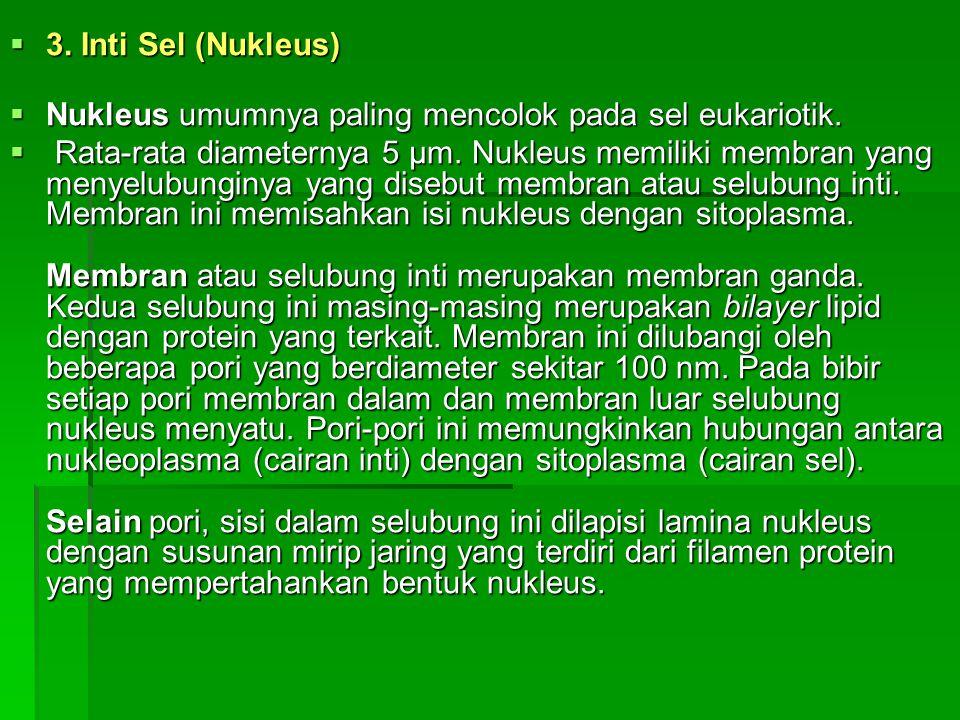  3. Inti Sel (Nukleus)  Nukleus umumnya paling mencolok pada sel eukariotik.  Rata-rata diameternya 5 µm. Nukleus memiliki membran yang menyelubung