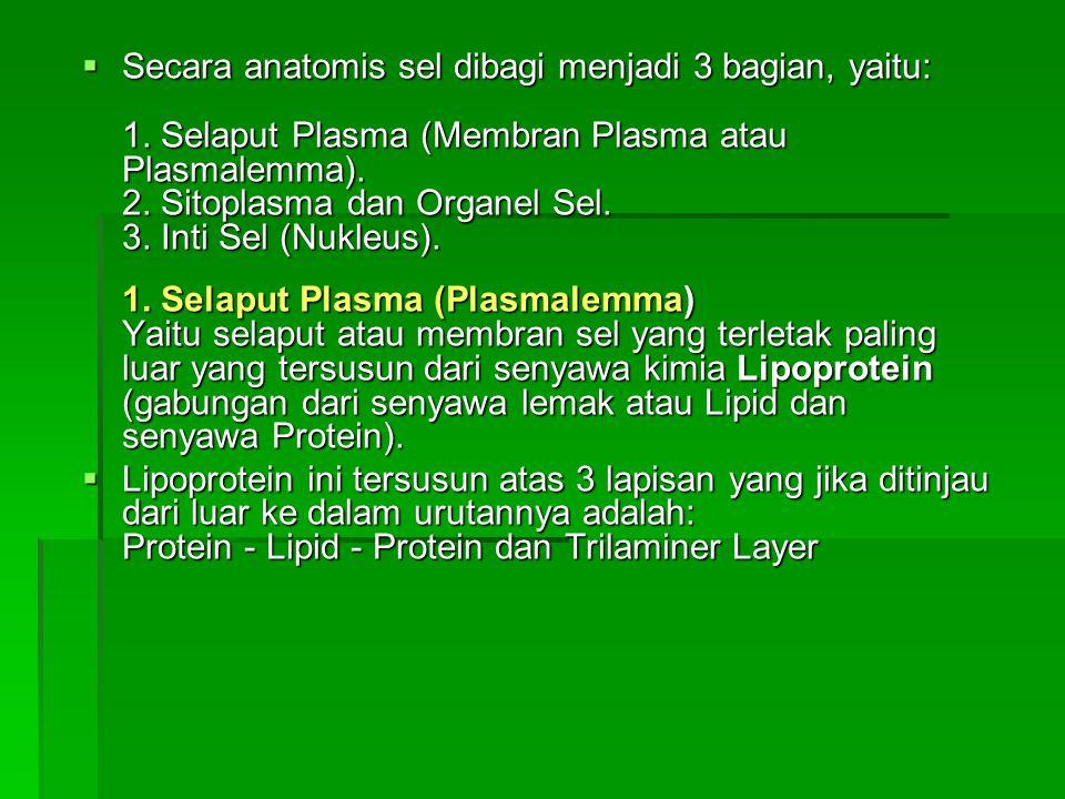  Secara anatomis sel dibagi menjadi 3 bagian, yaitu: 1. Selaput Plasma (Membran Plasma atau Plasmalemma). 2. Sitoplasma dan Organel Sel. 3. Inti Sel