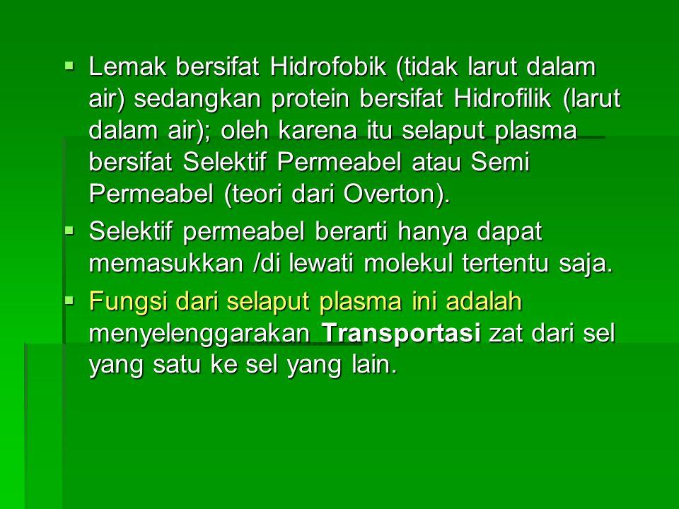  Lemak bersifat Hidrofobik (tidak larut dalam air) sedangkan protein bersifat Hidrofilik (larut dalam air); oleh karena itu selaput plasma bersifat S