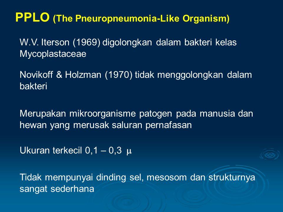 PPLO (The Pneuropneumonia-Like Organism) W.V. Iterson (1969) digolongkan dalam bakteri kelas Mycoplastaceae Novikoff & Holzman (1970) tidak menggolong