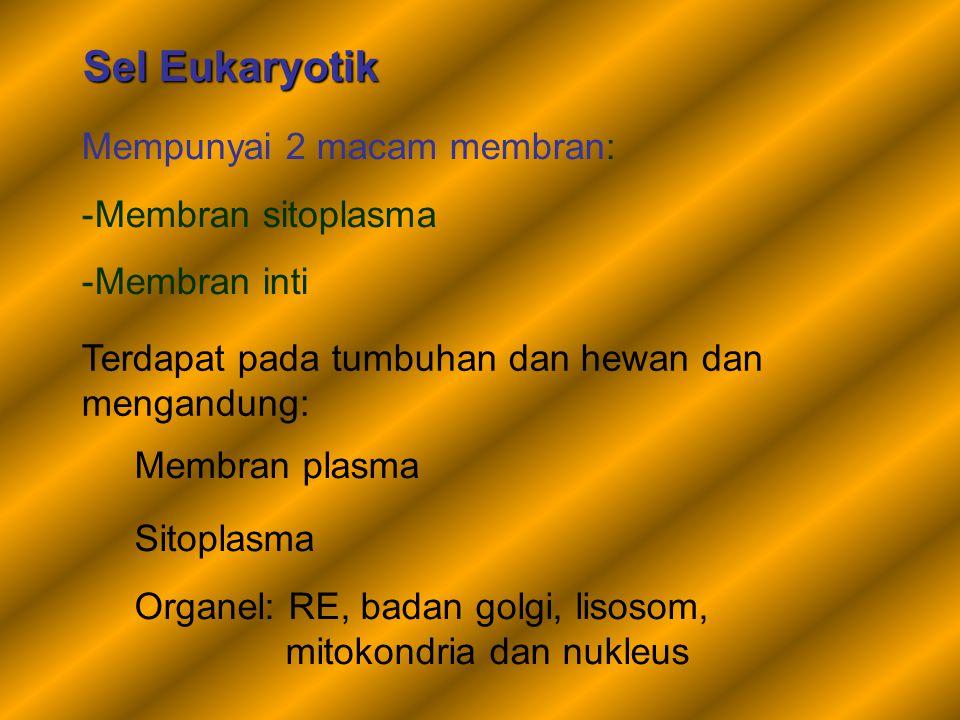 Sel Eukaryotik Mempunyai 2 macam membran: -Membran sitoplasma -Membran inti Terdapat pada tumbuhan dan hewan dan mengandung: Membran plasma Sitoplasma