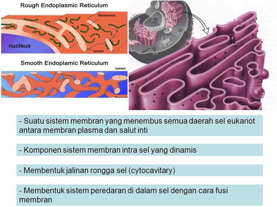 - Suatu sistem membran yang menembus semua daerah sel eukariot antara membran plasma dan salut inti - Komponen sistem membran intra sel yang dinamis -