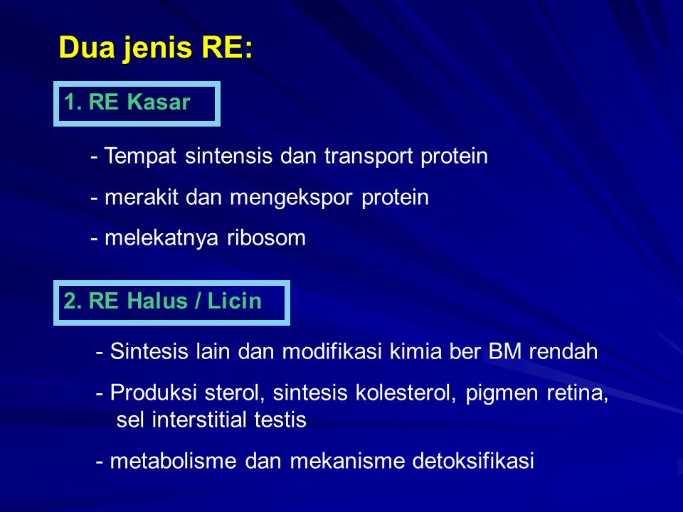 Dua jenis RE: 1. RE Kasar 2. RE Halus / Licin - Tempat sintensis dan transport protein - merakit dan mengekspor protein - melekatnya ribosom - Sintesi