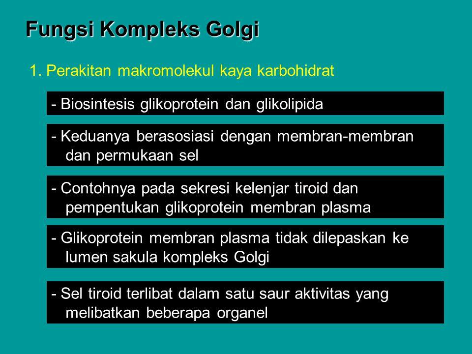 Fungsi Kompleks Golgi 1. Perakitan makromolekul kaya karbohidrat - Biosintesis glikoprotein dan glikolipida - Keduanya berasosiasi dengan membran-memb