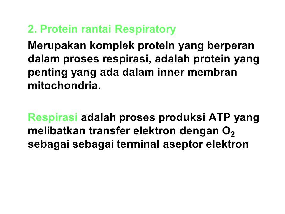 2. Protein rantai Respiratory Merupakan komplek protein yang berperan dalam proses respirasi, adalah protein yang penting yang ada dalam inner membran