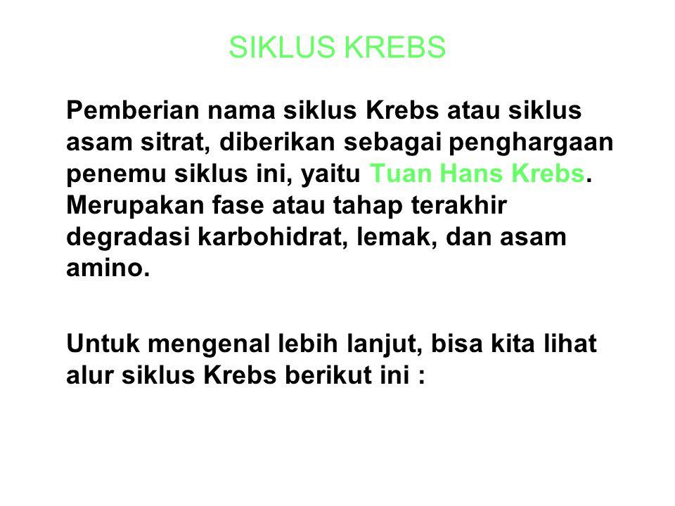 SIKLUS KREBS Pemberian nama siklus Krebs atau siklus asam sitrat, diberikan sebagai penghargaan penemu siklus ini, yaitu Tuan Hans Krebs.