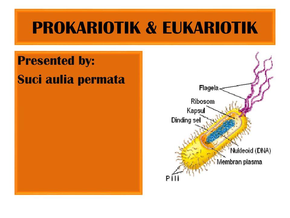 PROKARIOTIK & EUKARIOTIK Presented by: Suci aulia permata