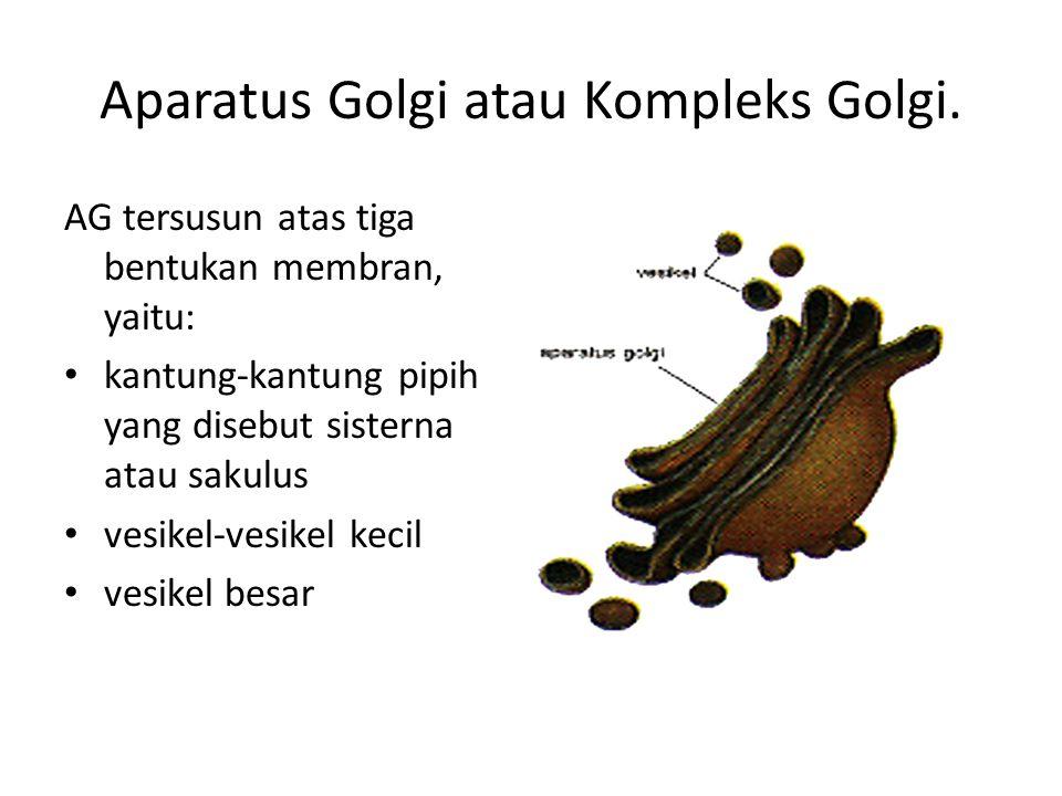 Aparatus Golgi atau Kompleks Golgi.