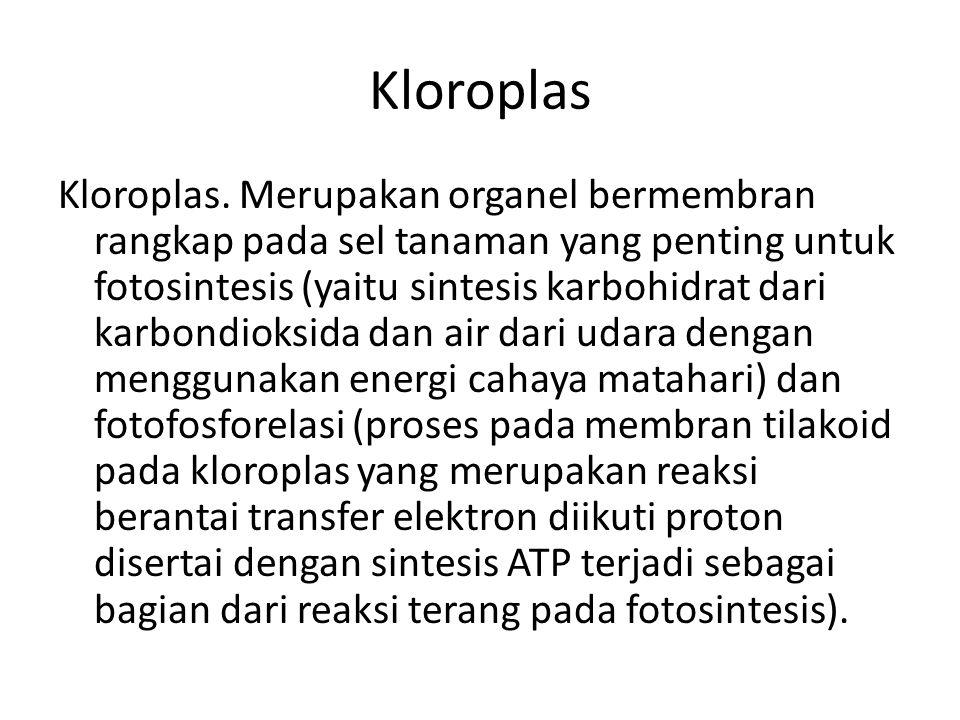 Kloroplas Kloroplas.