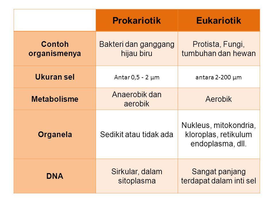 ProkariotikEukariotik Contoh organismenya Bakteri dan ganggang hijau biru Protista, Fungi, tumbuhan dan hewan Ukuran sel Antar 0,5 - 2 µmantara 2-200 µm Metabolisme Anaerobik dan aerobik Aerobik OrganelaSedikit atau tidak ada Nukleus, mitokondria, kloroplas, retikulum endoplasma, dll.