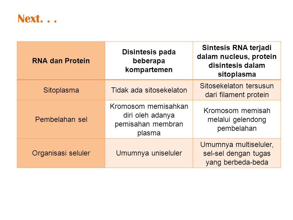 RNA dan Protein Disintesis pada beberapa kompartemen Sintesis RNA terjadi dalam nucleus, protein disintesis dalam sitoplasma SitoplasmaTidak ada sitosekelaton Sitosekelaton tersusun dari filament protein Pembelahan sel Kromosom memisahkan diri oleh adanya pemisahan membran plasma Kromosom memisah melalui gelendong pembelahan Organisasi selulerUmumnya uniseluler Umumnya multiseluler, sel-sel dengan tugas yang berbeda-beda Next...