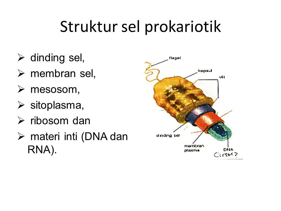 Struktur sel prokariotik  dinding sel,  membran sel,  mesosom,  sitoplasma,  ribosom dan  materi inti (DNA dan RNA).