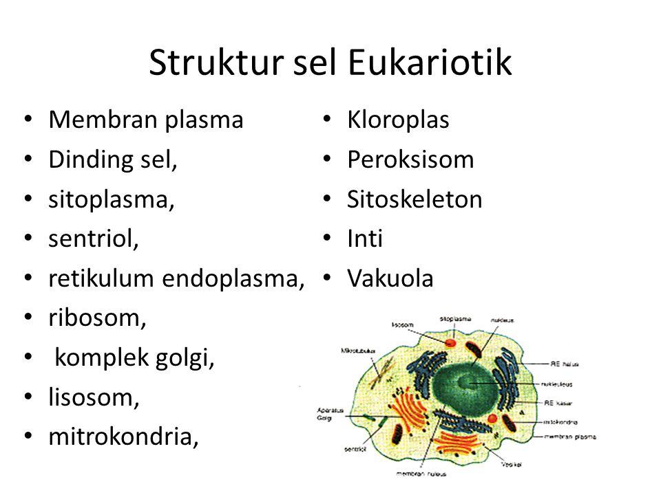 Struktur sel Eukariotik Membran plasma Dinding sel, sitoplasma, sentriol, retikulum endoplasma, ribosom, komplek golgi, lisosom, mitrokondria, Kloroplas Peroksisom Sitoskeleton Inti Vakuola Sentrosom