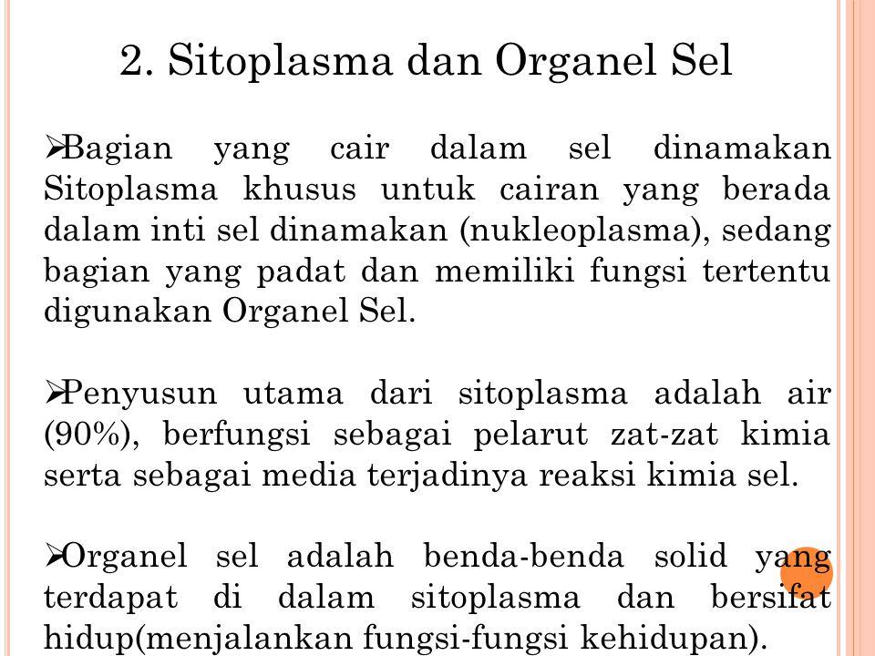 2. Sitoplasma dan Organel Sel  Bagian yang cair dalam sel dinamakan Sitoplasma khusus untuk cairan yang berada dalam inti sel dinamakan (nukleoplasma
