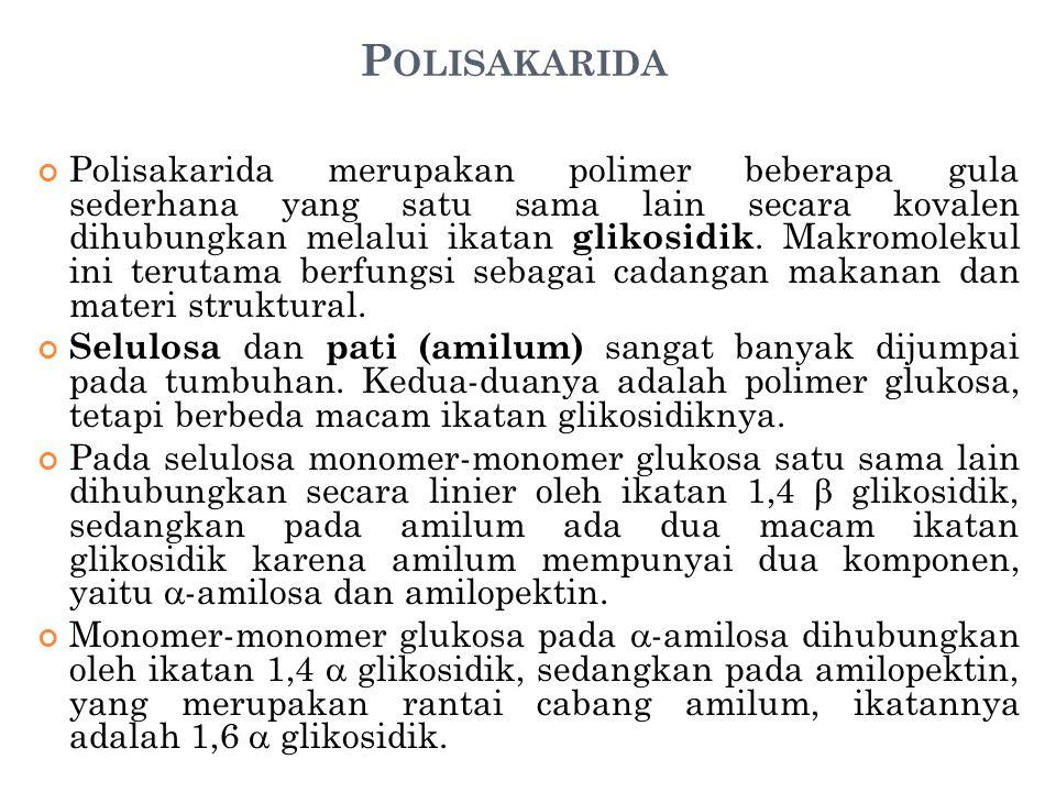 P OLISAKARIDA Polisakarida merupakan polimer beberapa gula sederhana yang satu sama lain secara kovalen dihubungkan melalui ikatan glikosidik. Makromo