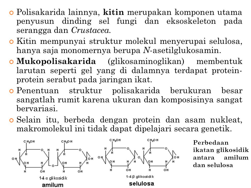 Polisakarida lainnya, kitin merupakan komponen utama penyusun dinding sel fungi dan eksoskeleton pada serangga dan Crustacea.