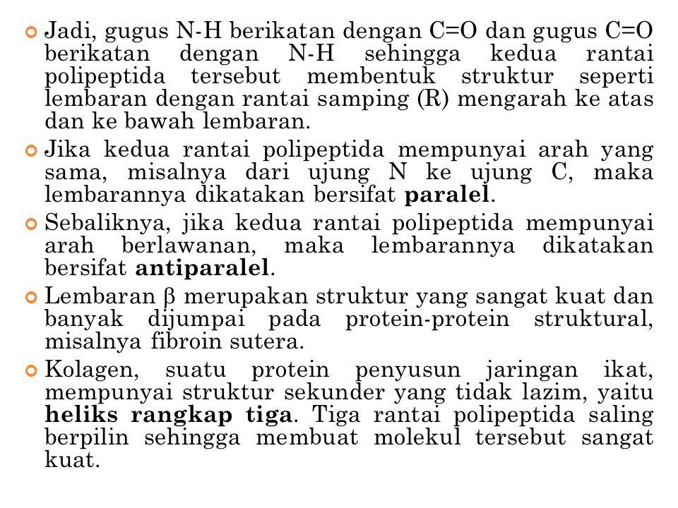 Jadi, gugus N-H berikatan dengan C=O dan gugus C=O berikatan dengan N-H sehingga kedua rantai polipeptida tersebut membentuk struktur seperti lembaran