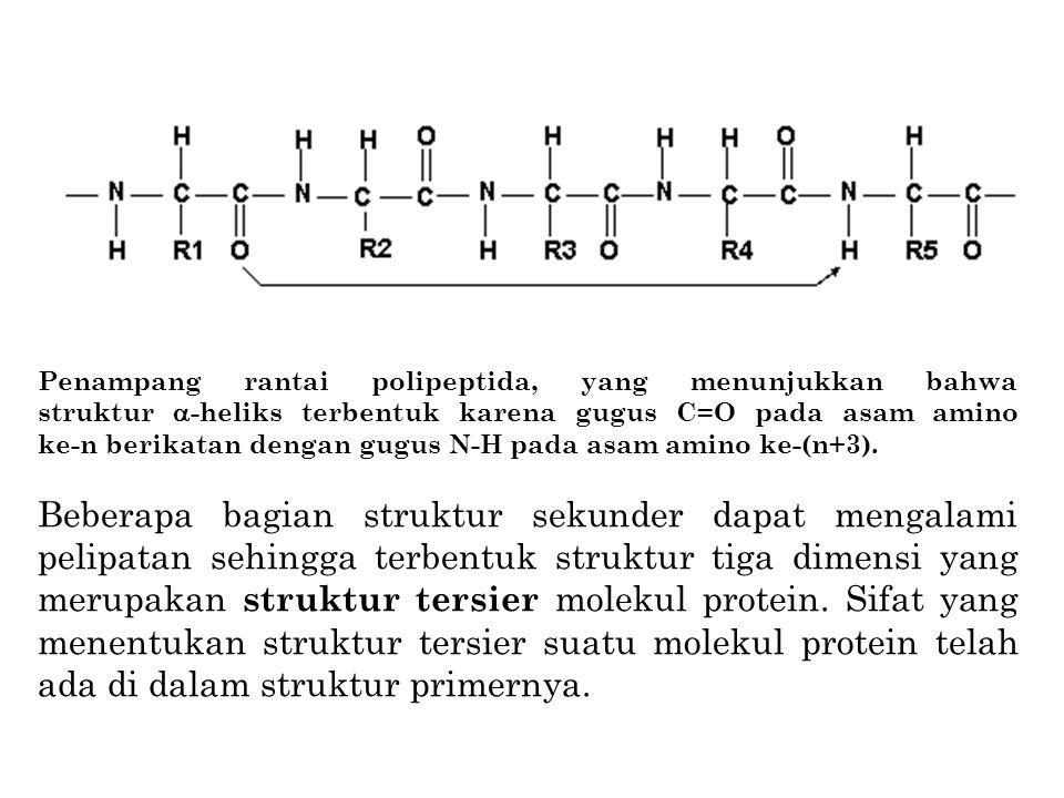 Penampang rantai polipeptida, yang menunjukkan bahwa struktur  -heliks terbentuk karena gugus C=O pada asam amino ke-n berikatan dengan gugus N-H pad