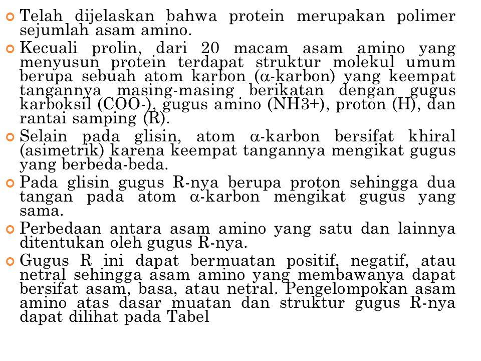 Telah dijelaskan bahwa protein merupakan polimer sejumlah asam amino. Kecuali prolin, dari 20 macam asam amino yang menyusun protein terdapat struktur
