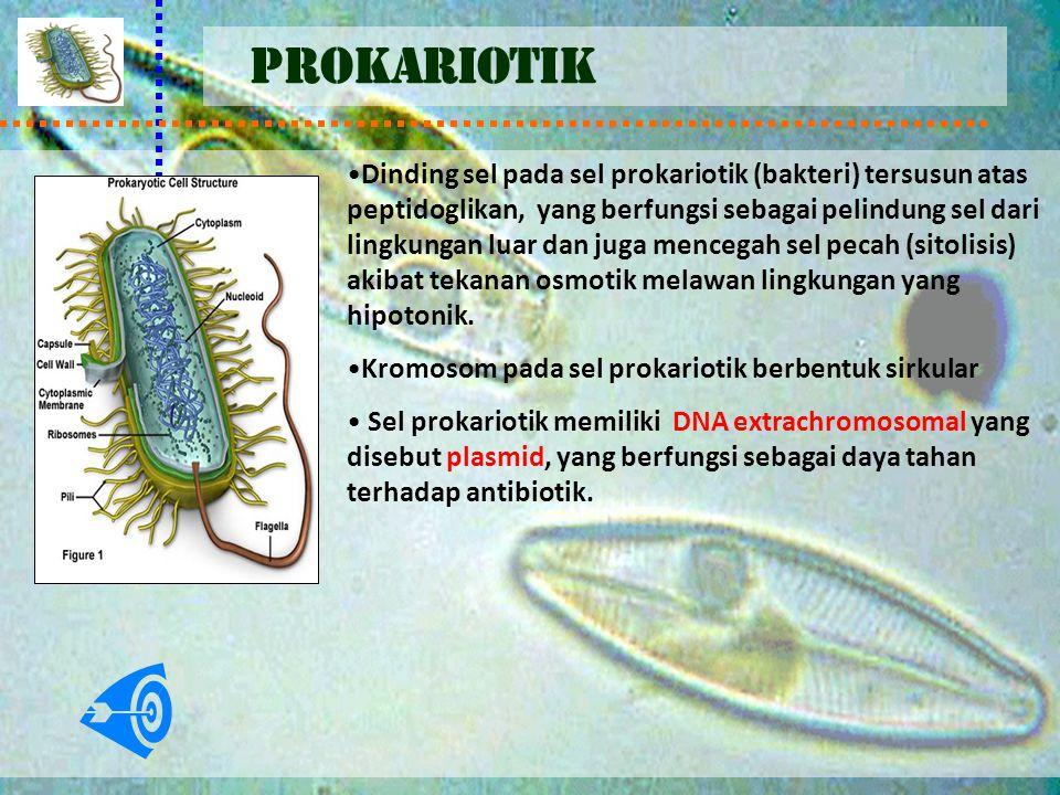 PROKARIOTIK Dinding sel pada sel prokariotik (bakteri) tersusun atas peptidoglikan, yang berfungsi sebagai pelindung sel dari lingkungan luar dan juga