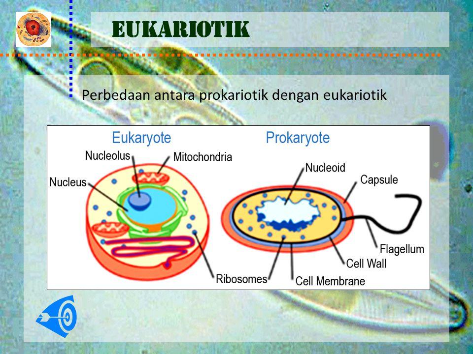 EUKARIOTIK Perbedaan antara prokariotik dengan eukariotik
