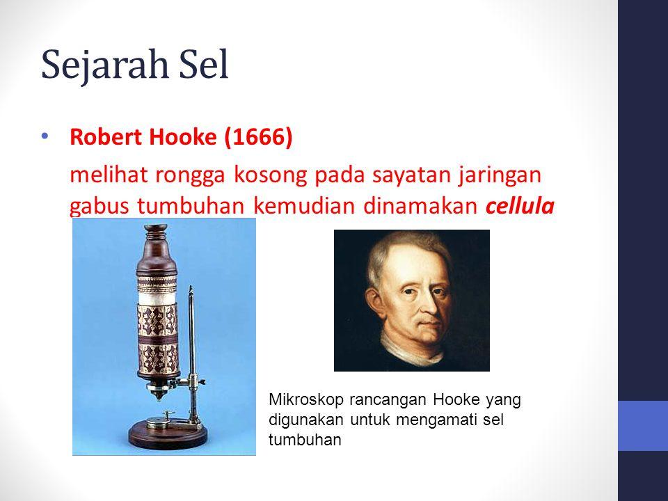 Sejarah Sel Robert Hooke (1666) melihat rongga kosong pada sayatan jaringan gabus tumbuhan kemudian dinamakan cellula Mikroskop rancangan Hooke yang d