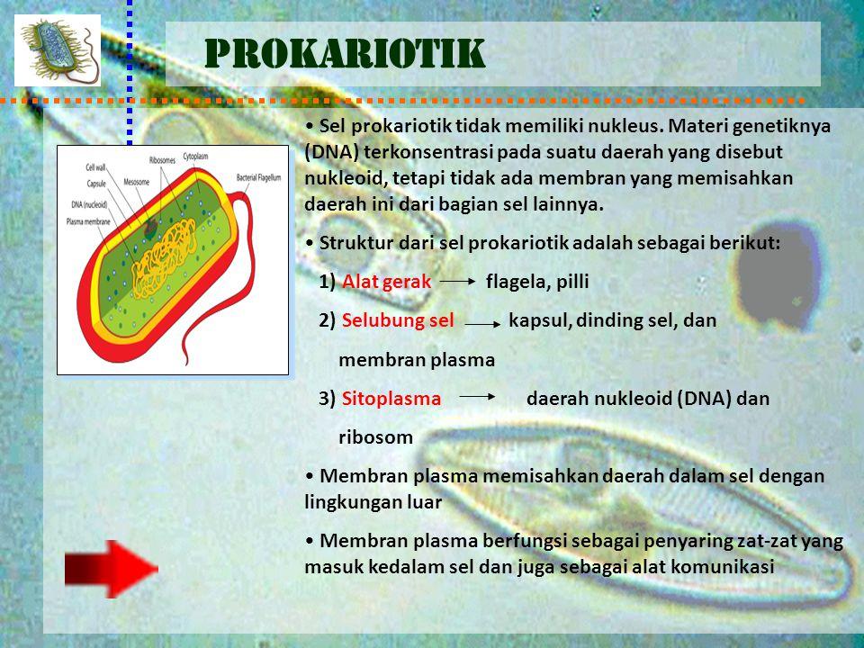 PROKARIOTIK Sel prokariotik tidak memiliki nukleus. Materi genetiknya (DNA) terkonsentrasi pada suatu daerah yang disebut nukleoid, tetapi tidak ada m