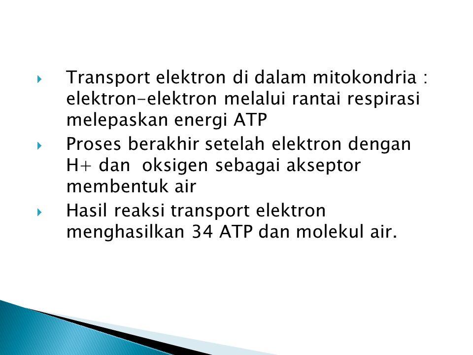  Transport elektron di dalam mitokondria : elektron-elektron melalui rantai respirasi melepaskan energi ATP  Proses berakhir setelah elektron dengan H+ dan oksigen sebagai akseptor membentuk air  Hasil reaksi transport elektron menghasilkan 34 ATP dan molekul air.